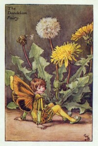 dandelion_flower_fairy